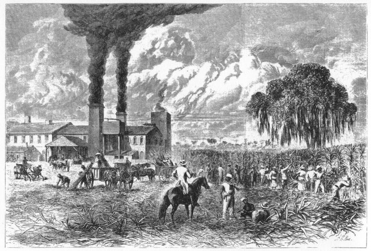 An illustration of slaves in the field.