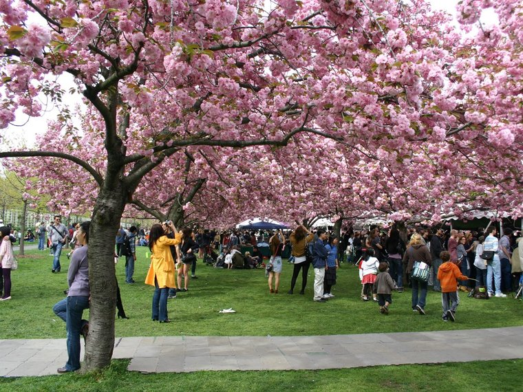 Snap some photos at Sakura Matsuri, the Cherry Blossom Festival, at the Brooklyn Botanical Gardens, which takes place on April 26-27.